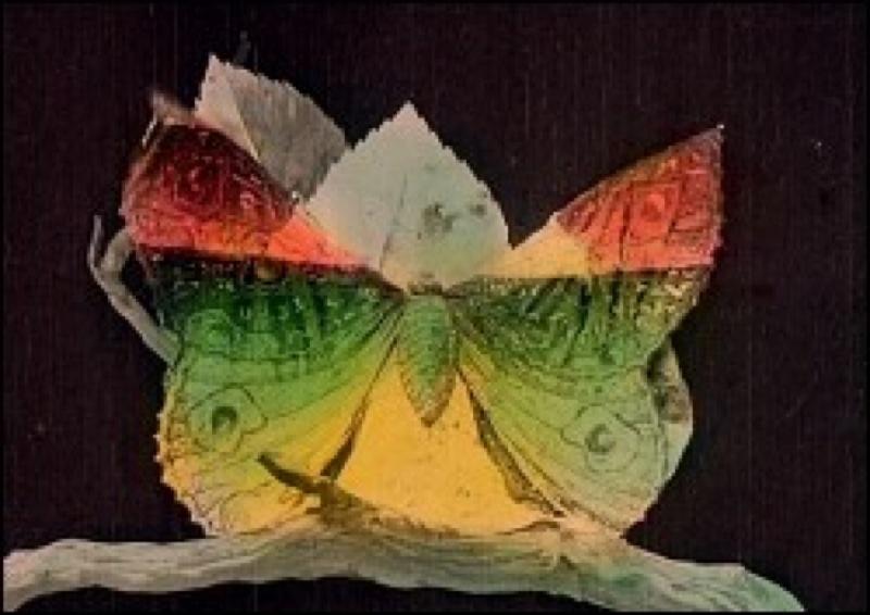 Métamorphose du papillon de Gaston Velle, Pathé Frères, 1905