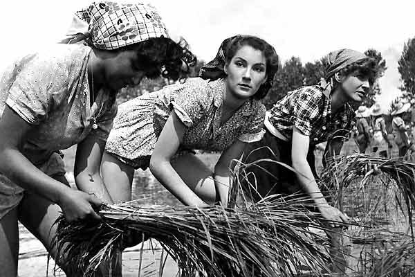 Riz amer de Giuseppe de Santis, 1949