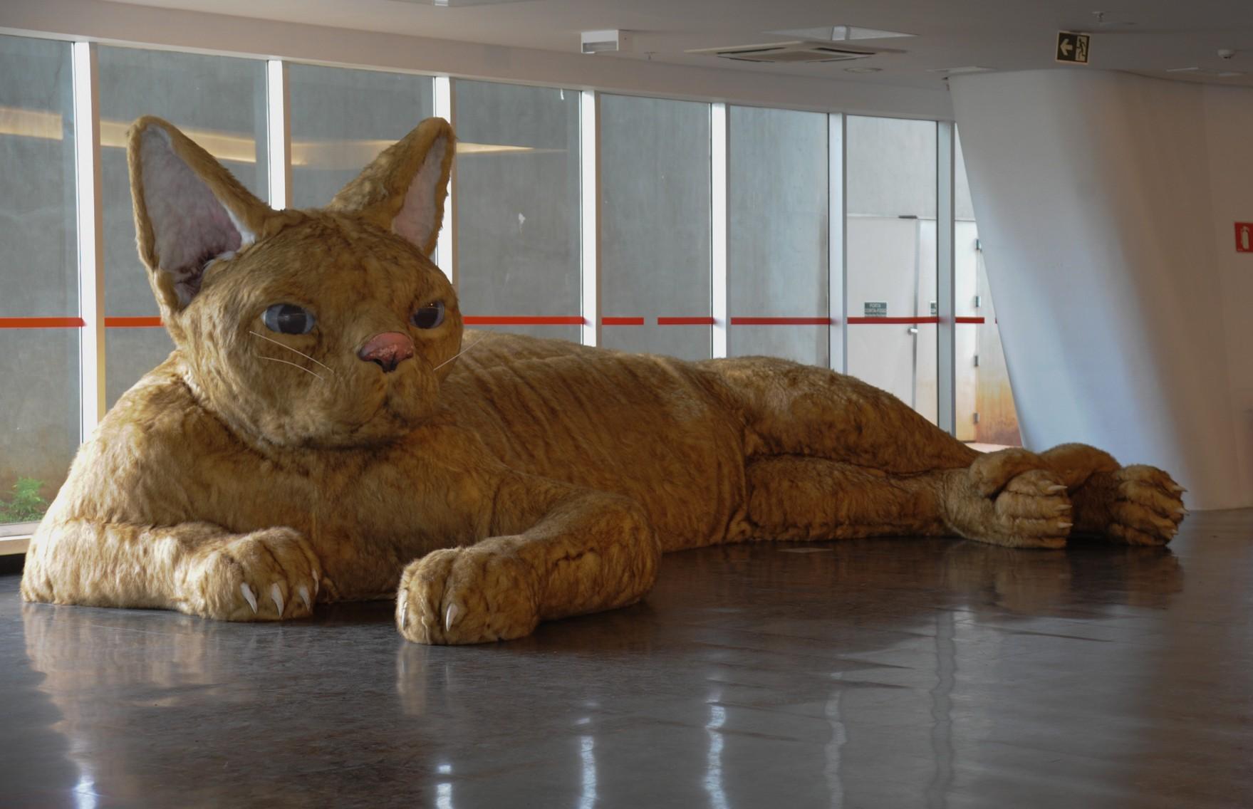 Le chat de Nina Pandolfo au musée d'Art Contemporain de Sao Paulo