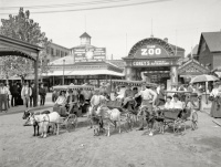 les chariots de chèvre, Coney Island, 1904.jpg